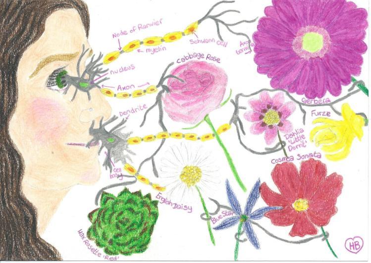 FlowerFave